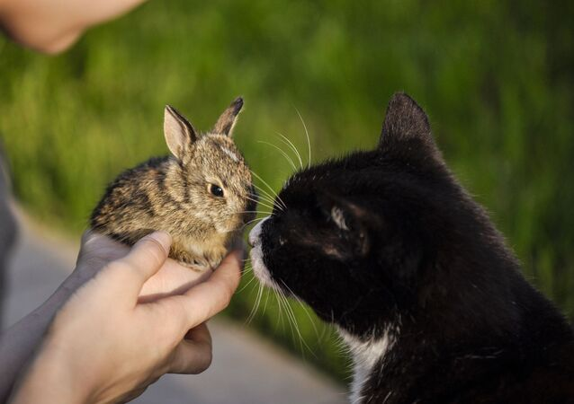 Un chat et un lapin (image d'illustration)