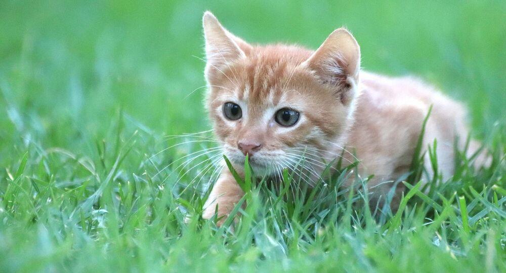 Un chat en train de chasser
