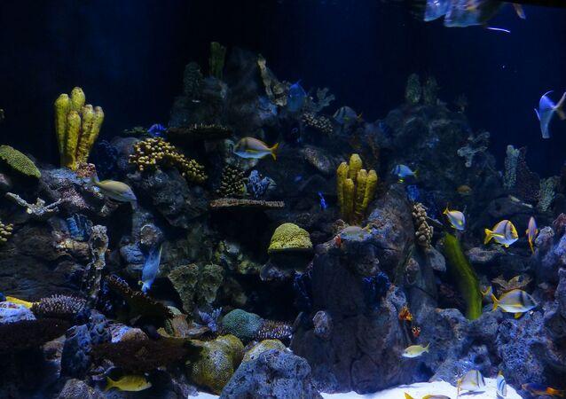 Des coraux