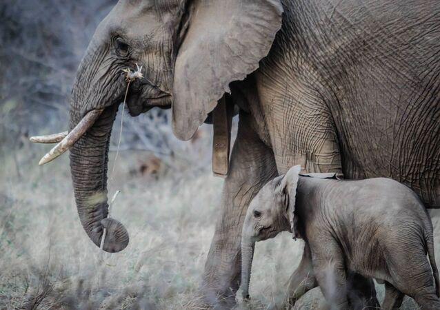 Un éléphant et son petit