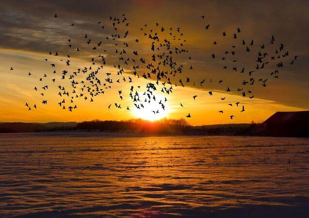 Des oiseaux (image d'illustration)