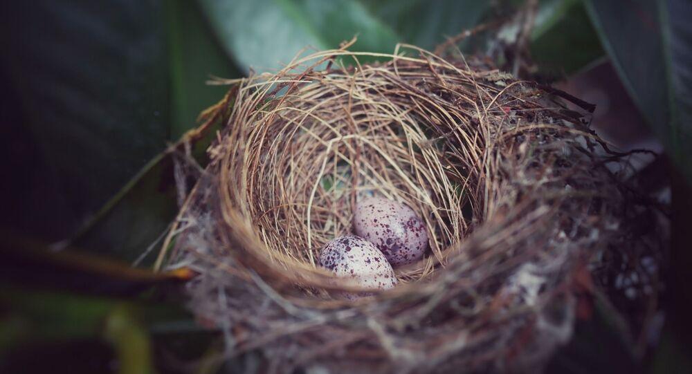 Un nid d'oiseau (image d'illustration)
