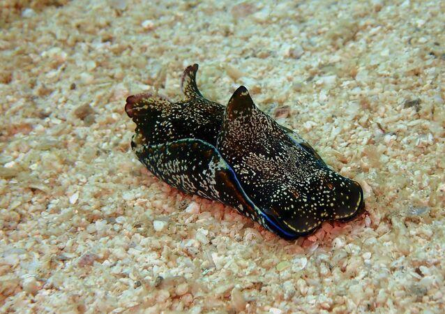 Une limace de mer