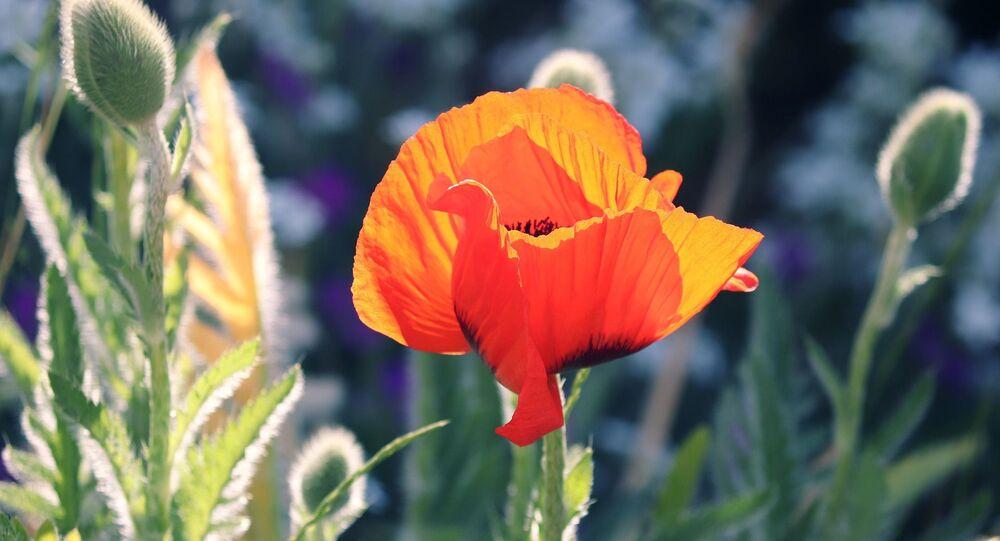 Une fleur (image d'illustration)