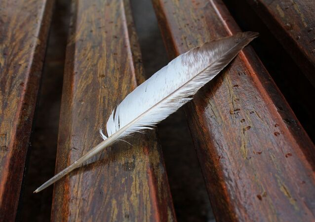 Un plume