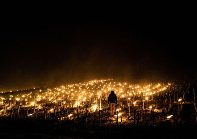 Les agriculteurs français prennent des mesures pour sauver leurs vignes, image d'illustration