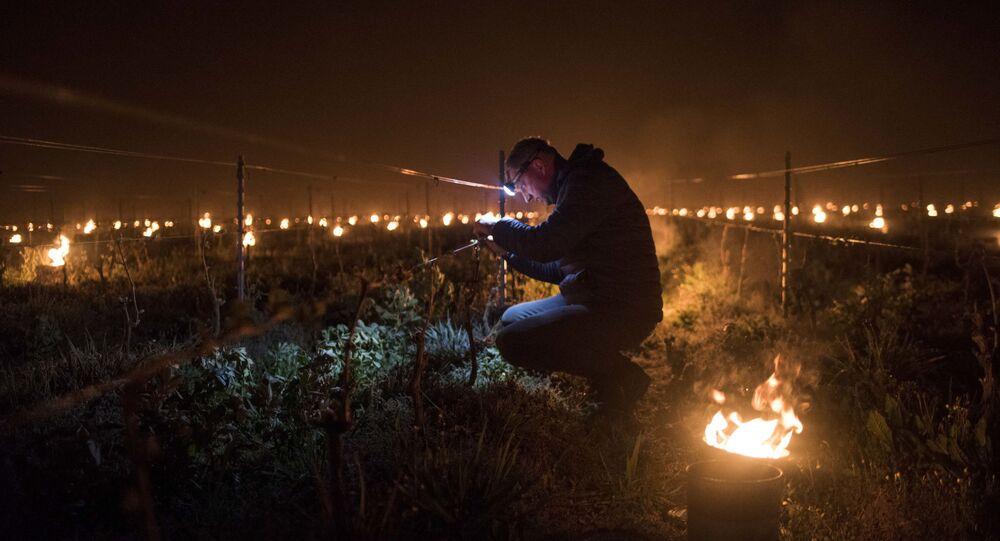 Un vigneron français tente de contenir le froid qui s'abat sur ses vignes avec des braseros, près de Nantes, avril 2021
