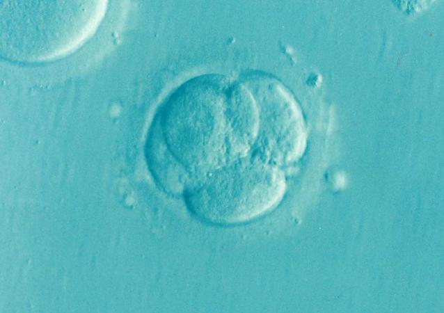 Un embryon (image d'illustration)