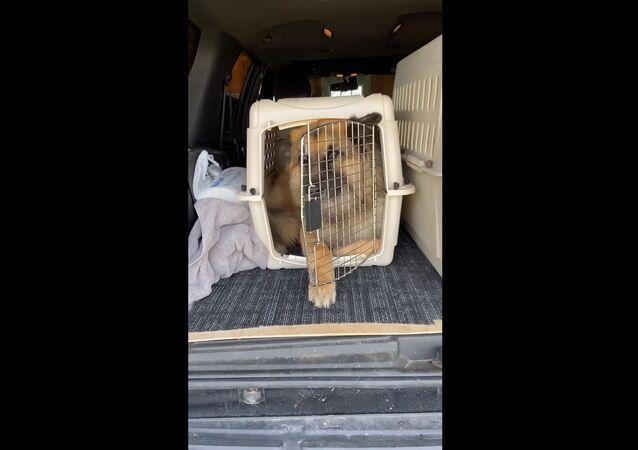 Une cage trop petite pour un grand chien? Pas si sûr!