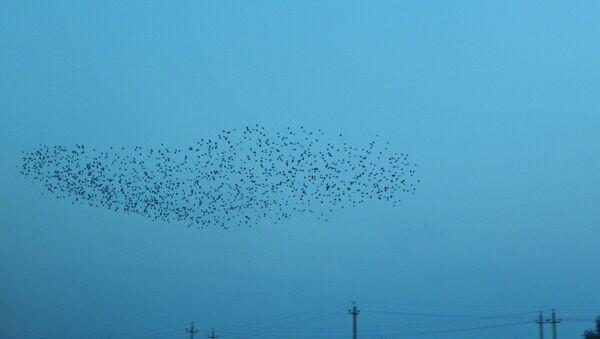 Des oiseaux - Sputnik France