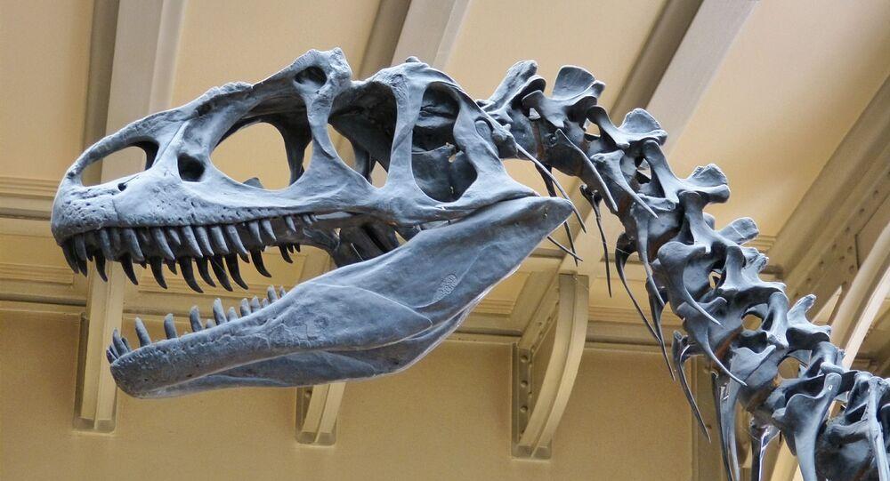 Squelette de dinosaure (image d'illustration)