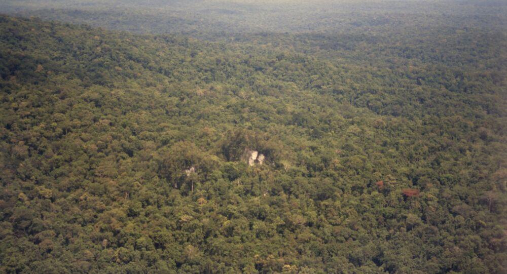 Forêt tropicale, Nouvelle-Guinée
