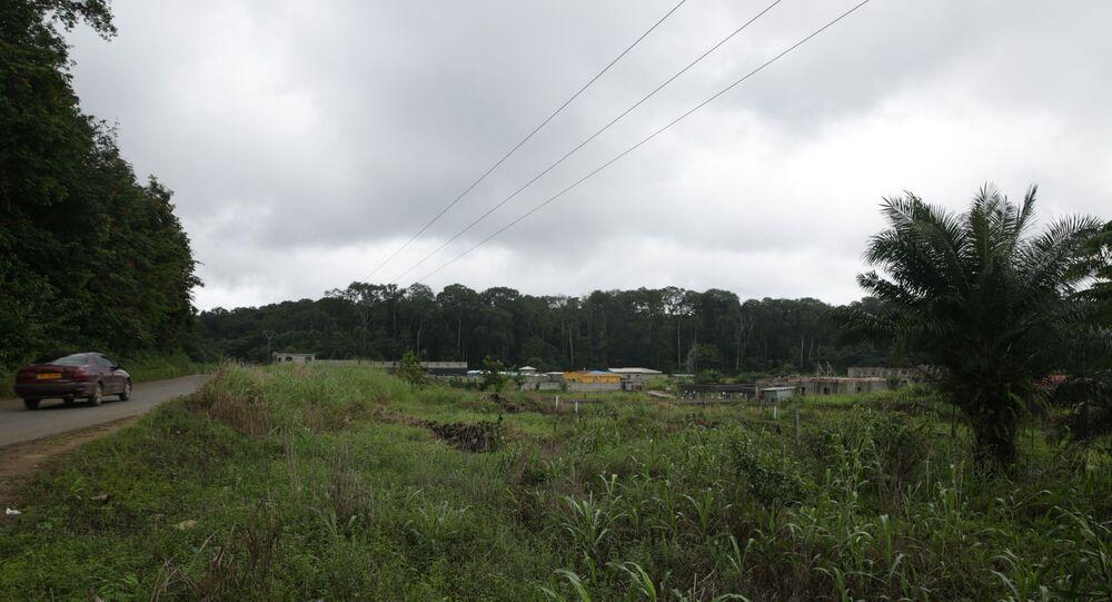La forêt d'Akanda, le Gabon