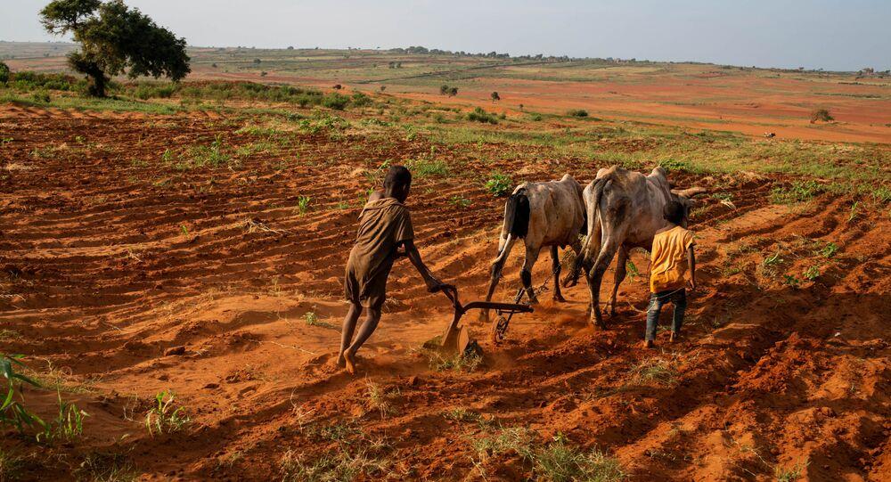 Des enfants tentent de labourer une plantation dans le Grand Sud de Betsimeda, Madagascar