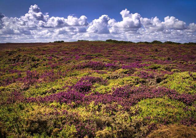 Un champ en Bretagne (image d'illustration)