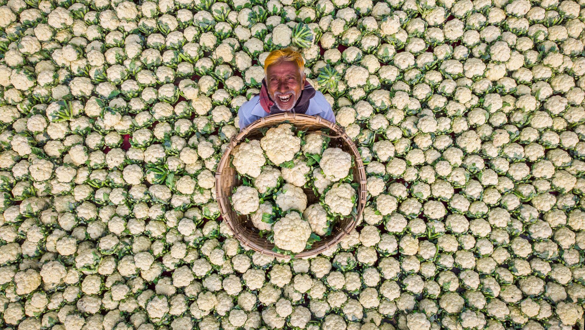 Un fermier heureux, portrait d'un paysan montrant la récolte de chou-fleur - Sputnik France, 1920, 05.08.2021