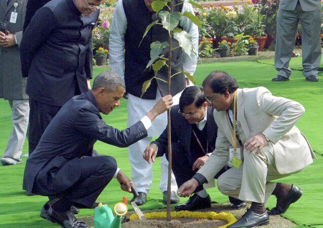 Le président Obama a planté un arbre de Bodhi (Ficus religieux) en Inde