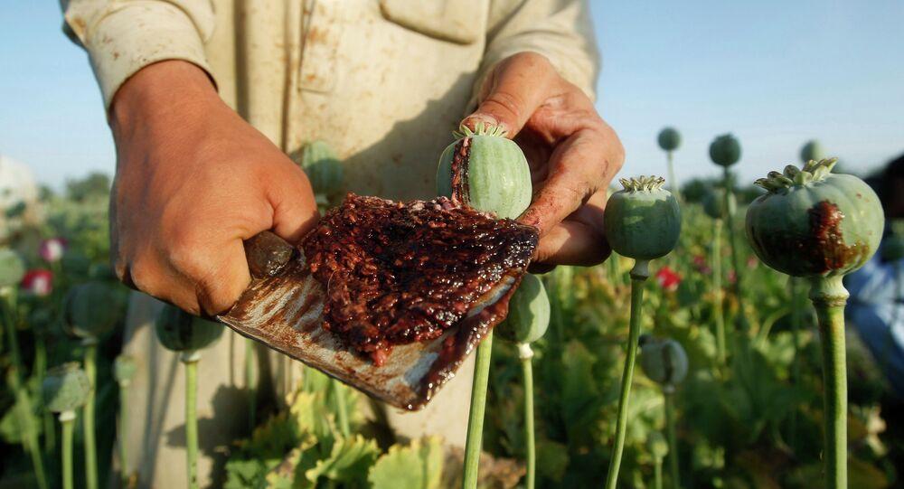 Un champ de pavot en Afghanistan