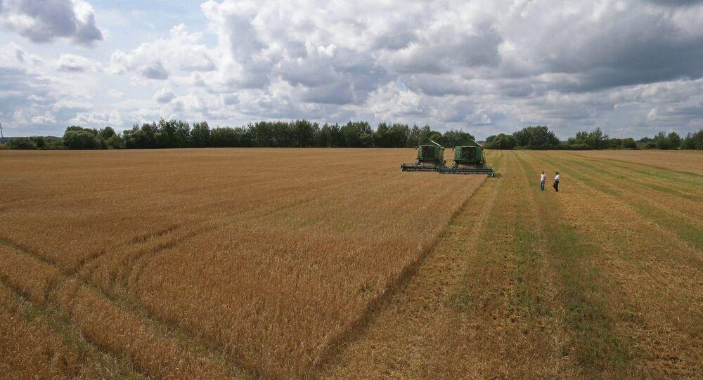 La récolte. Photo d'illustration