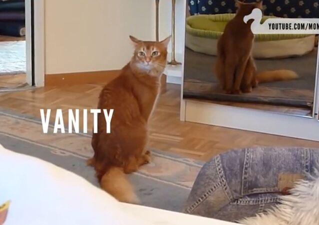Rien de plus terrifiant qu'un chat