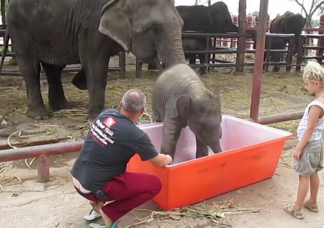 Un éléphanteau prend son bain