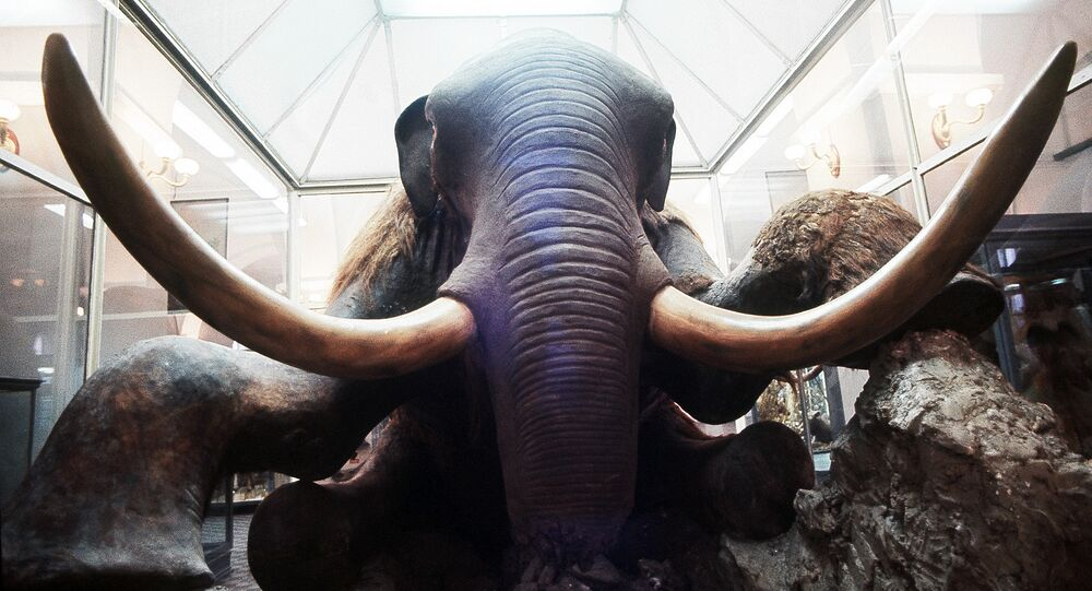 Un mammouth au musée zoologique