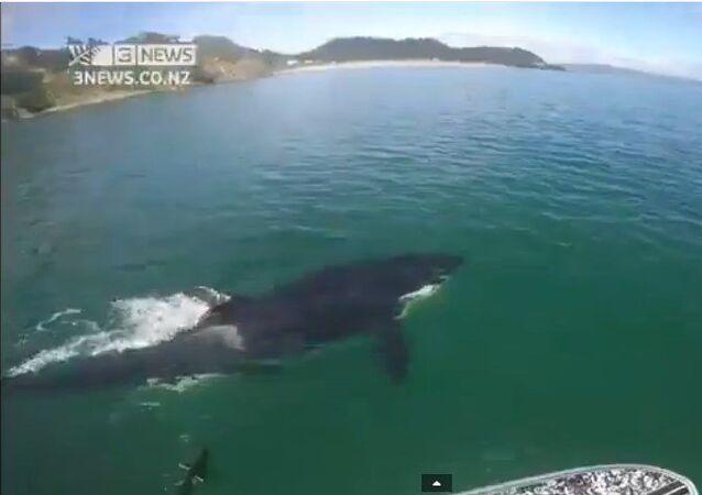 Voguer en compagnie d'une orque