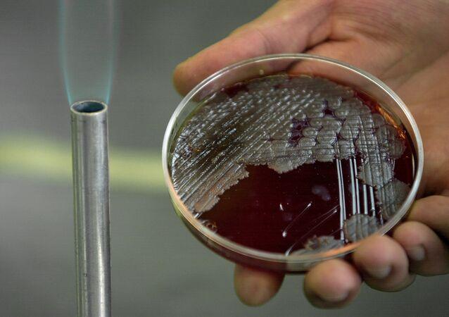 Bactéries Bacillus anthracis