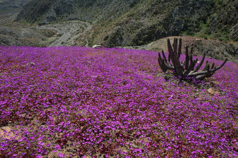 Le désert d'Atacama