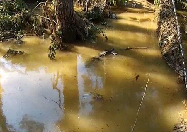 Géorgie/inondation: des sauveteurs essaient d'attraper un crocodile