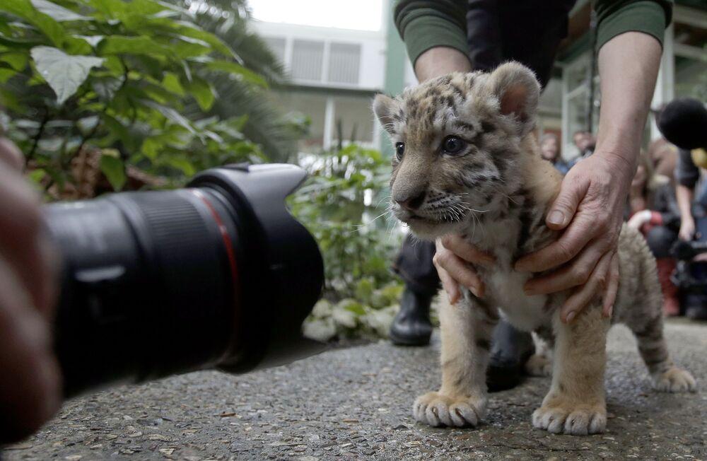 Une enfance de tigre