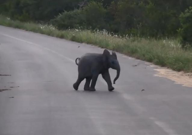 Un bébé éléphant s'essaie à la chasse aux hirondelles