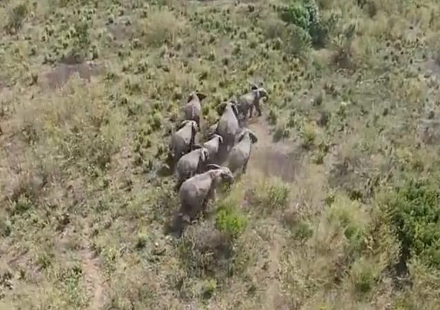 Tanzanie: des drones pour faire éloigner les éléphants