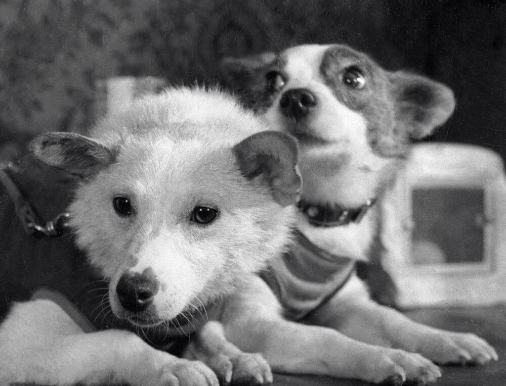 Belka et Strelka, deux chiens dans l'espace.