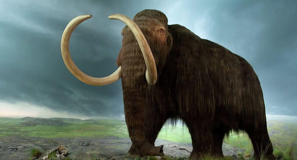 Un mammouth