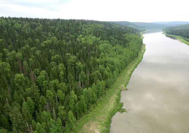 les forêts dans la taïga sibérienne