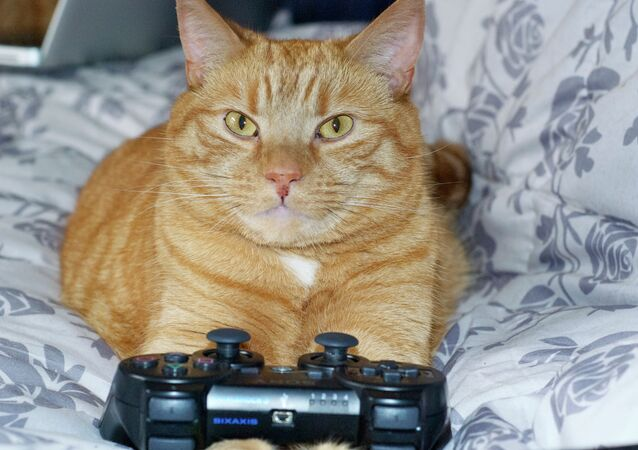 Chat et playstation