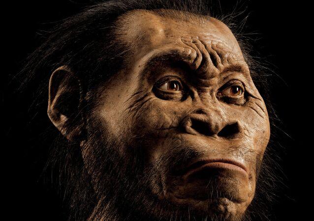 Homo naledi: l'homme se découvre un nouvel ancêtre