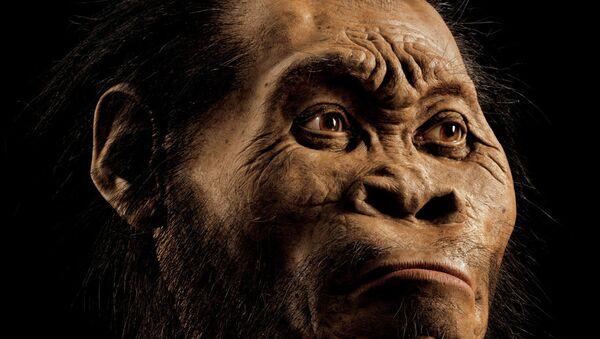 L'australopithèque Lucy a fait une chute d'arbre mortelle - Sputnik France