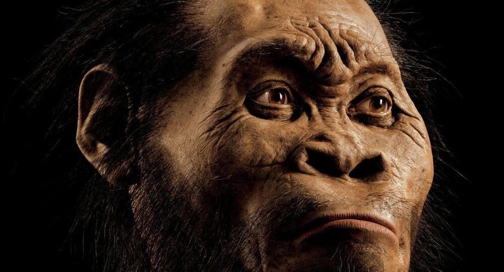 L'australopithèque Lucy