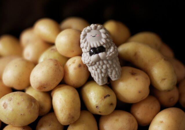 Pommes de terre. Image d'illustration