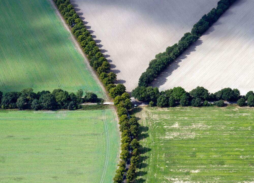 Les allées plantées il y plus de 200 ans dans la commune de Schönefeld du Brandebourg (Allemagne)