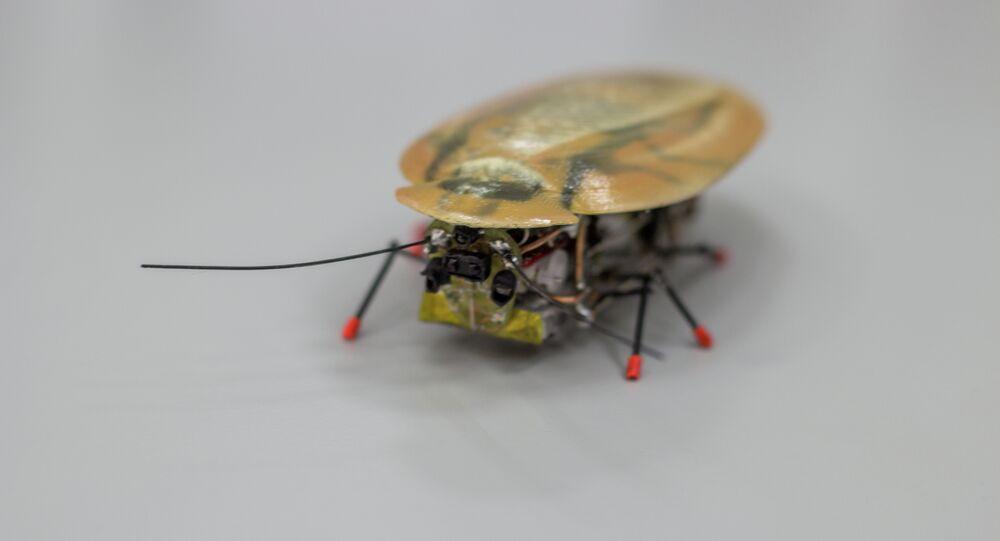 Un robot-cafard