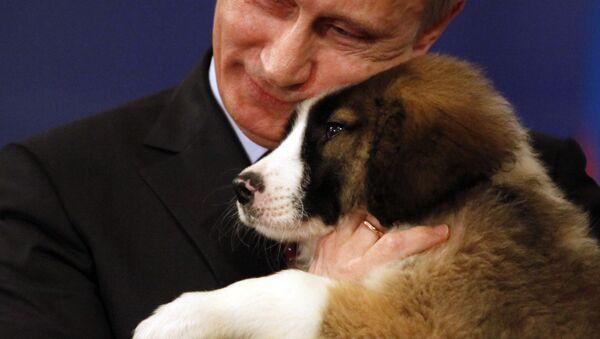 M. Poutine, j'aimerais bien avoir un chiot… - Sputnik France