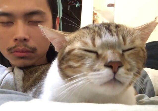 Un chat et son maître en mode détente