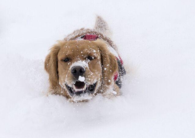 Le chien et la première neige, et autres nouvelles du monde des animaux