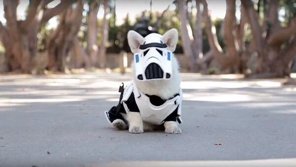 Un chien déguisé en soldat impérial - Sputnik France