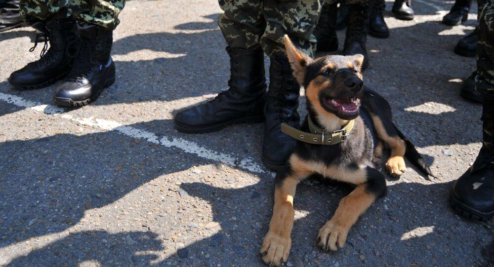 Un chien, détecteur d'explosifs de haut niveau