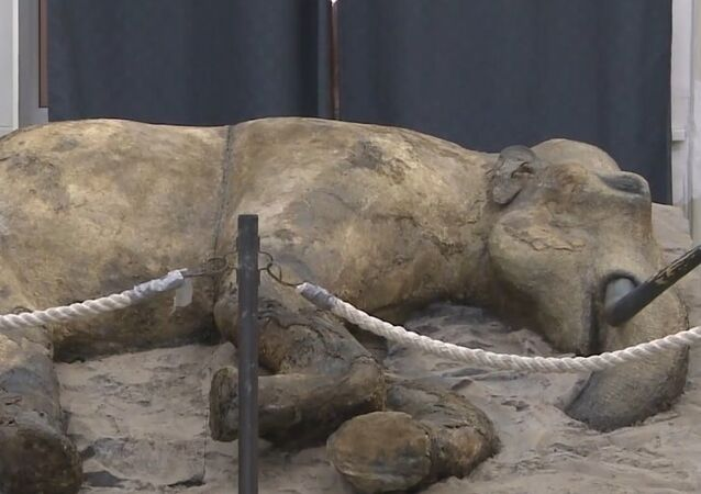 Les habitants de Saint-Pétersbourg font connaissance avec un mammouth