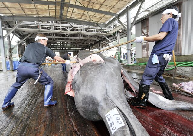 Tuer les baleines au nom de la « science » ? Le Japon s'y connait.